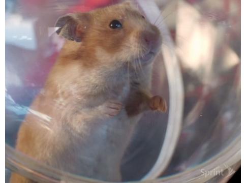 Meet a Talking Hamster's 'Framily' in New Sprint Spots
