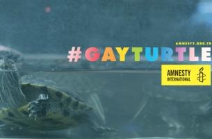 TBWA\Istanbul's Gay Turtle Highlights Homophobia & Prejudice in Turkey