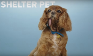Keyboard Cat Teams with Derpy Dogs to Help Give Shelter Pets a New Home