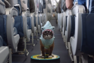 Can You Spot All the Memes in W+K NY & Delta Air Lines' Safety Video?