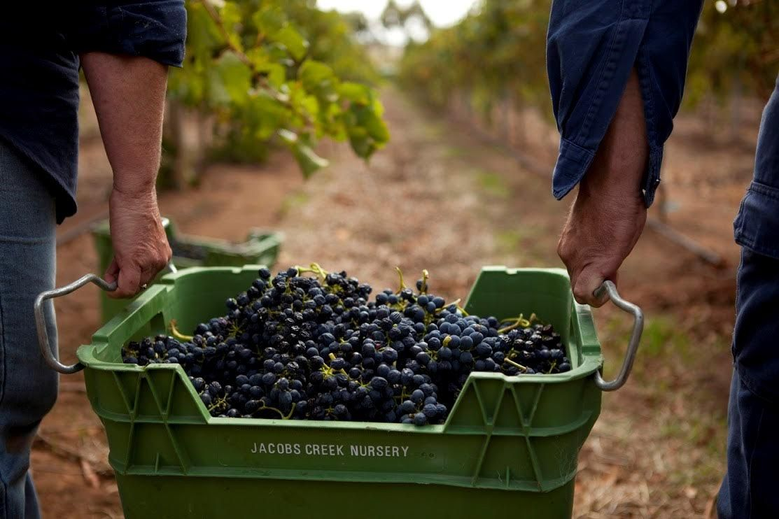 Pernod Ricard Winemakers Appoints AnalogFolk Australia as Global Digital Agency