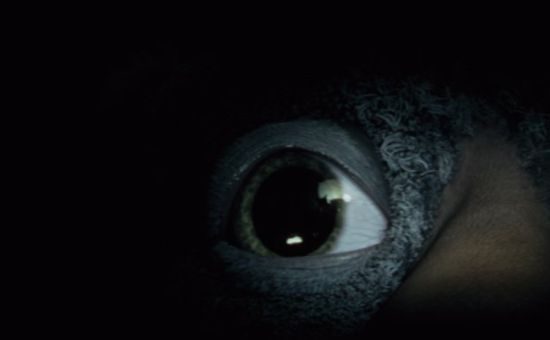 There's Something #UnderTheBed as John Lewis Teases Christmas 2017