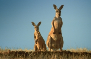Leo Burnett London Brings a Taste of the Outback to New McDonald's Spot