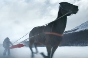 Are You Brave Enough to Go Skiing with Horses?