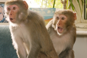Stop All the Monkey Business with The Sun's Kids Publication 'The Fun'