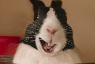 Motivational Bunnies Shout 'Legend' in New National Lottery Ireland Campaign