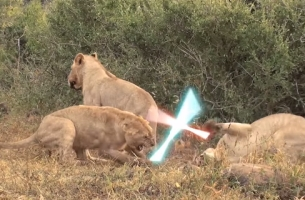 Safari Link Takes Funny Cat Videos to a New Level