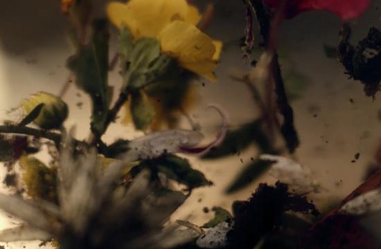 Petal Rage in Beautiful Manuel Alberto Claro Film