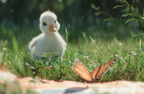 This Insanely Cute Disneyland Ad Features a Duckling Obsessed with Donald Duck