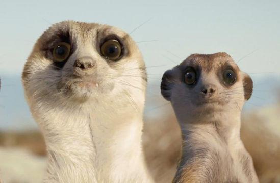 A Family of Meerkats Stars in Toyota's Cheeky Dakar Rally Ad