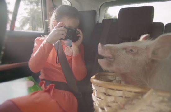 Piglet Productions' Porcine Suzuki Spot