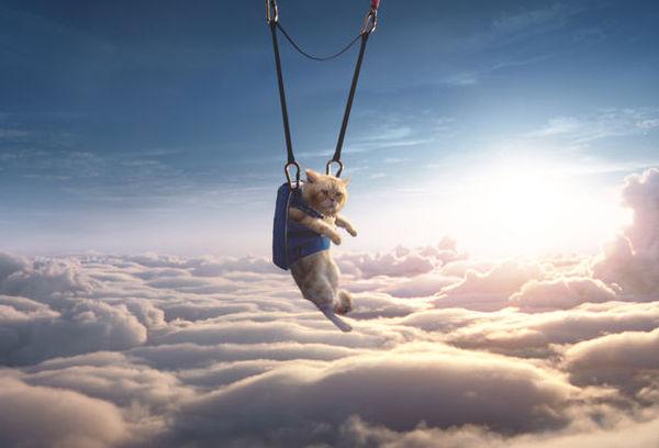 Framestore Takes to the Skies in Dizzying New Moneysupermarket Film