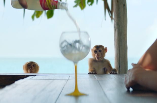 The Adorable Monkeys in This Schweppes Ad Aren't as Innocent as They Seem