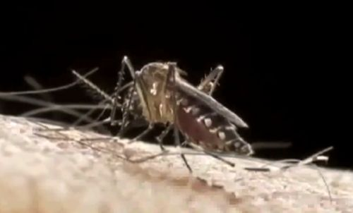 How Leo Burnett Sri Lanka Created A Mosquito-Repellent Newspaper