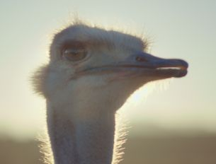 MPC Life Creates Aspirational CG Ostrich For Samsung in New Spot