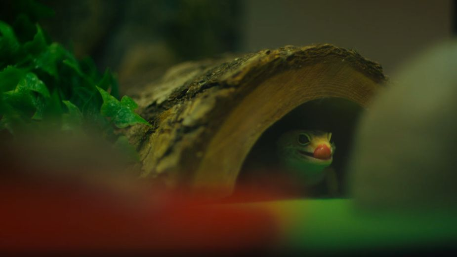 Despite It All, Pets are the Best in Pets at Home Campaign from The&Partnership London