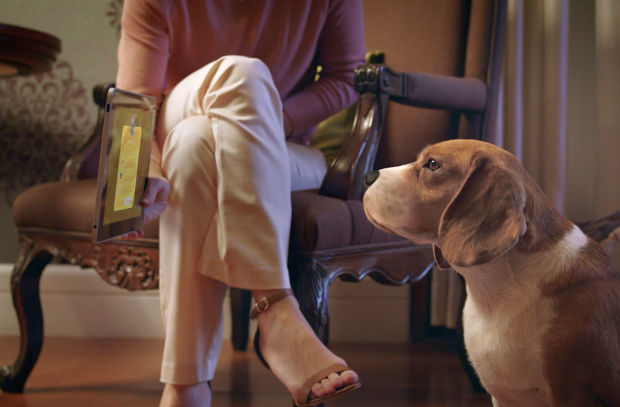 Petz Launches New Site Where Dogs Can Be Online Shoppers Too