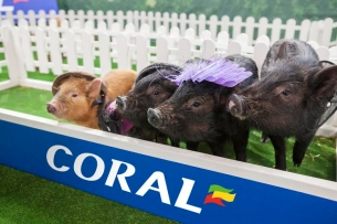 Space Brings Home the Bacon for Coral's Adorable CheltenHAM Festival