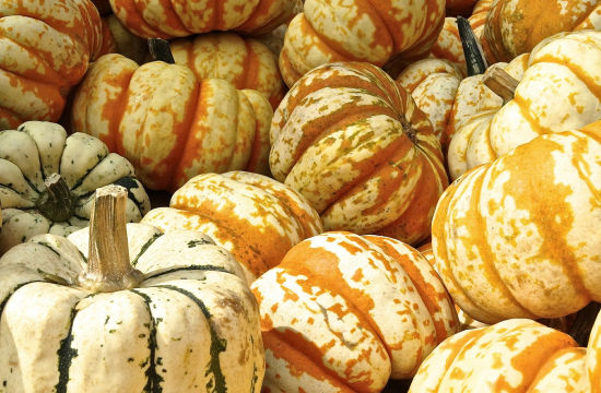 My Pumpkin Spiced Nightmare: 31 Days of Eating Nothing But Pumpkin Flavoured Foods