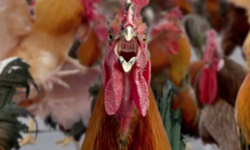 Raunchy Roosters on the Run in 72andSunny's Carl's Jr Ad