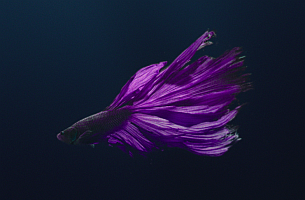 Havas London's Debut Film for Rolls-Royce is Simply Mesmerising