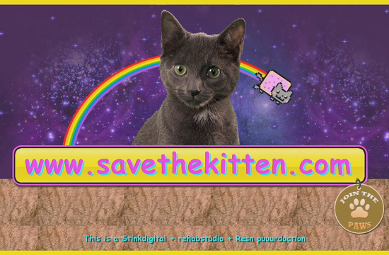 'Save the Kitten' Internet Telethon