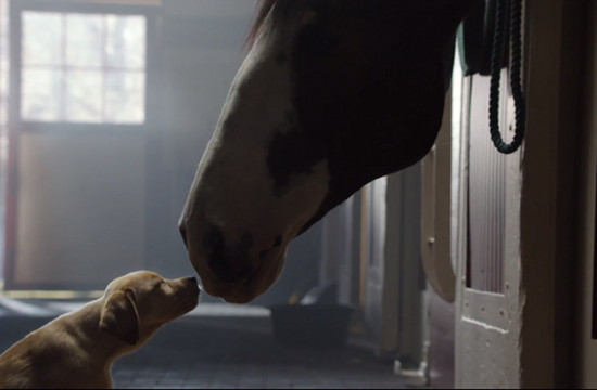 Budweiser's 'Aww' Moment in Super Bowl Ad