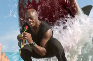 Seal's 'Kiss From a Rose' is Interrupted in Amusing Discovery Shark Week Spot