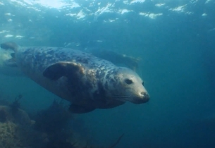 Director David Baksh Dives In with Seals & Sealant for New Wickes Spot