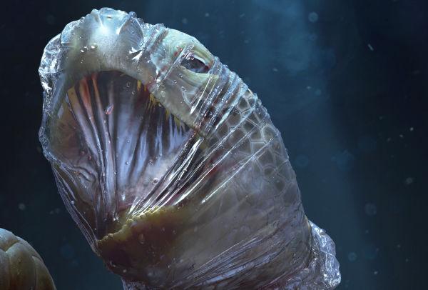 New Sea Shepherd Campaign Highlights the Devastating Environmental Impact of Plastic Waste
