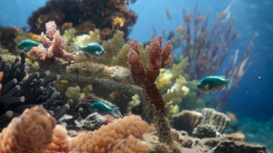 Hope Grows: The Underwater Visual Wizardry Behind SHEBA's Hope Reef