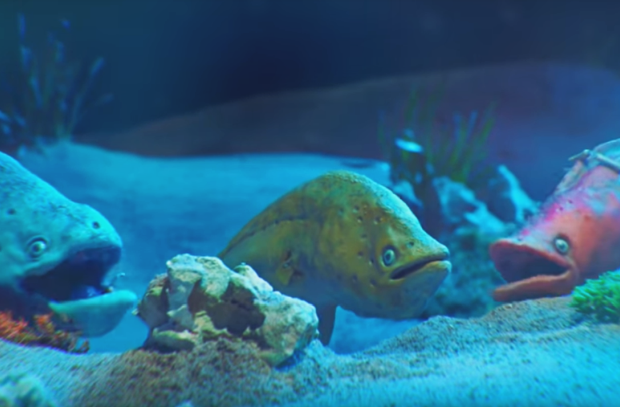smart Is as Electric as It Gets with This Band of Musical Eels
