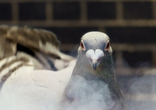 m/SIX's Pigeon Throws Out Snazzy Moves for New Virgin Money Campaign