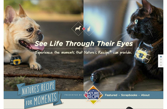 Nature's Recipe Offers 'A Pet's Eye View'