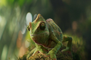 Meet Roccy, Berocca's Bhangra Loving Lizard