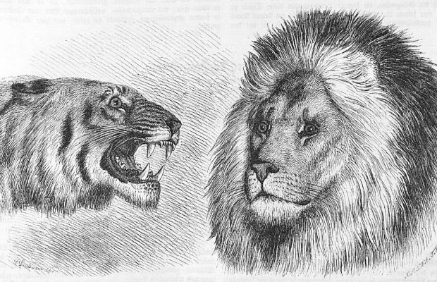 Real Lions v Paper Tigers