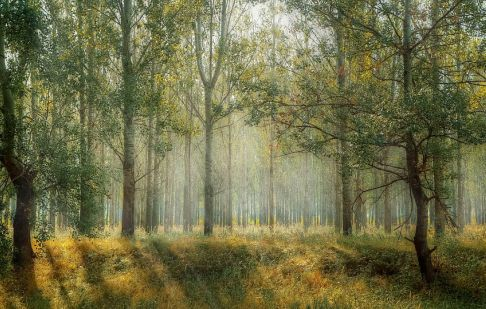 If a Tree Falls in a Deserted Forest, Does It Make a Sound?