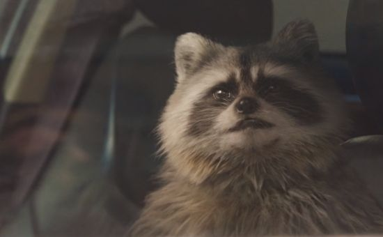 Rabid Raccoon Gives Slackers a Furry Surprise for Volkswagen