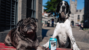 Ricky Gervais Inspires BrewDog to Help Find Dogs New Homes by Turning Beer Cans into Media Spots