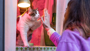 MoPETS Captures the Romance of the Movies for Pet Owners Valentine's Day Campaign