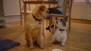 Gravity Road Brings Canine Capers to Sainsbury's Valentines Day