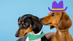 ThoughtMatter Puts Dachshunds Center Stage for Launch of Witzig