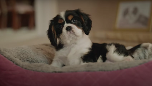 Life's a Treat for Pampered Pets in Cute Petbarn Spots