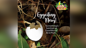 EsselWorld Bird Park's 'Nature, Nurtured' Campaign Will Leave You Eggstatic