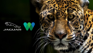 Jaguar NA and Wildlife Conservation Society Raise Awareness of Big Cat for International Jaguar Day