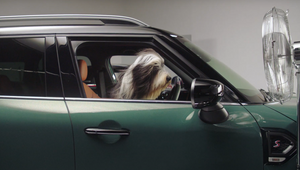 MINI UK Opens its Doors to Paws for Happier Travel Partnership with Dogs Trust