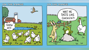 Perdue Showcases Rich and Interesting Lives of Its Chickens with Tongue-in-Cheek Digital Cartoon