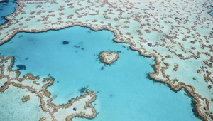 The Great Barrier Reef Foundation Appoints Leo Burnett Australia as Creative Agency