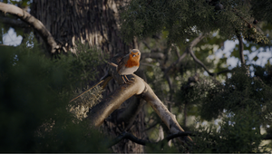 MPC's Playful Robin Takes Us on a Journey with a JEEP in Premier Ad