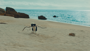 One Man's Lifeline is Another Dog's Stick in Hilarious Greenies Spot